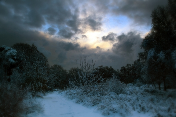 """Dark Winter Morning""by `scotto"